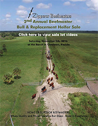 2nd Annual Beefmaster Bull & Replacement Heifer Sale